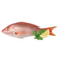 Carisayur Produk  Ikan Kakap Merah Frozen