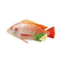 Carisayur Produk  Ikan Nila Frozen