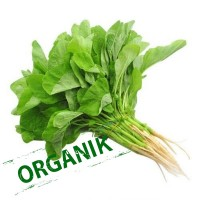 Carisayur Produk Bayam Organik
