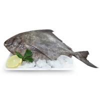 Carisayur Produk  Ikan Bawal Laut Frozen