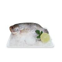Carisayur Produk  Ikan Gurame Frozen